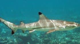 il-vit-24-ans-avec-une-dent-de-requin-coincee-dans-le-pied