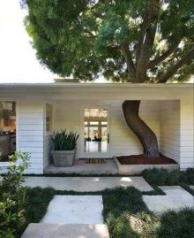 arbre dans maison