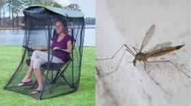 moustique chaise