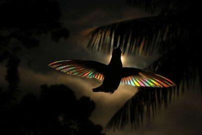 oiseau multicolor 5