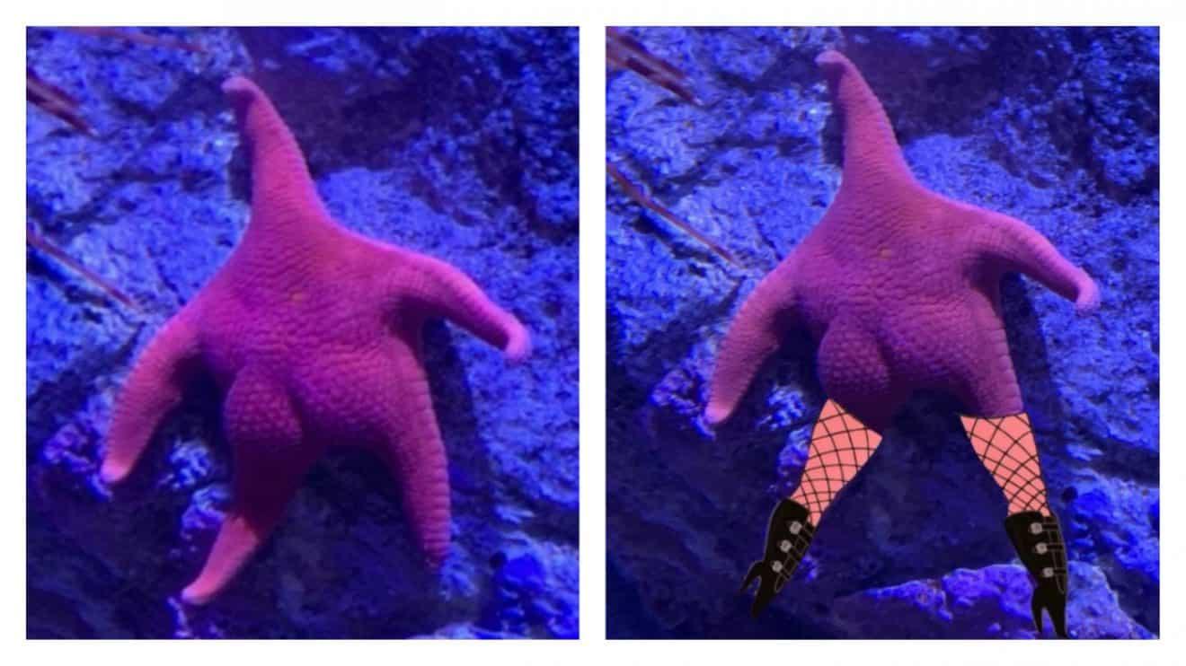 Le Vrai Patrick étoile De Mer Les Internautes Ont