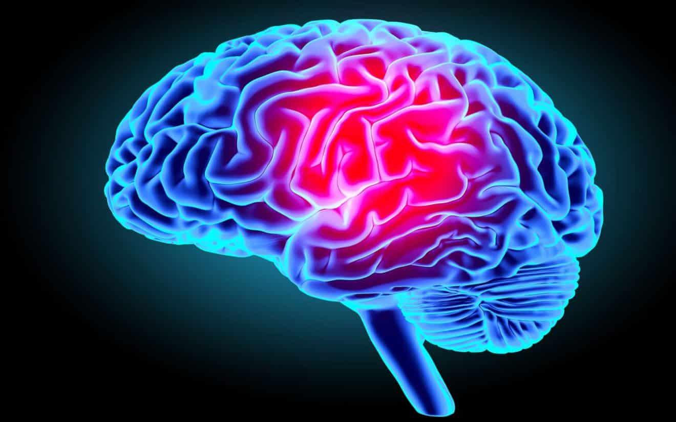 Le cerveau : connaissez-vous ses secrets ? Faites le test
