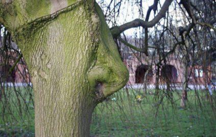 arbres nez