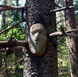arbre 18