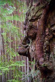 arbre 38