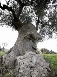 arbres pense