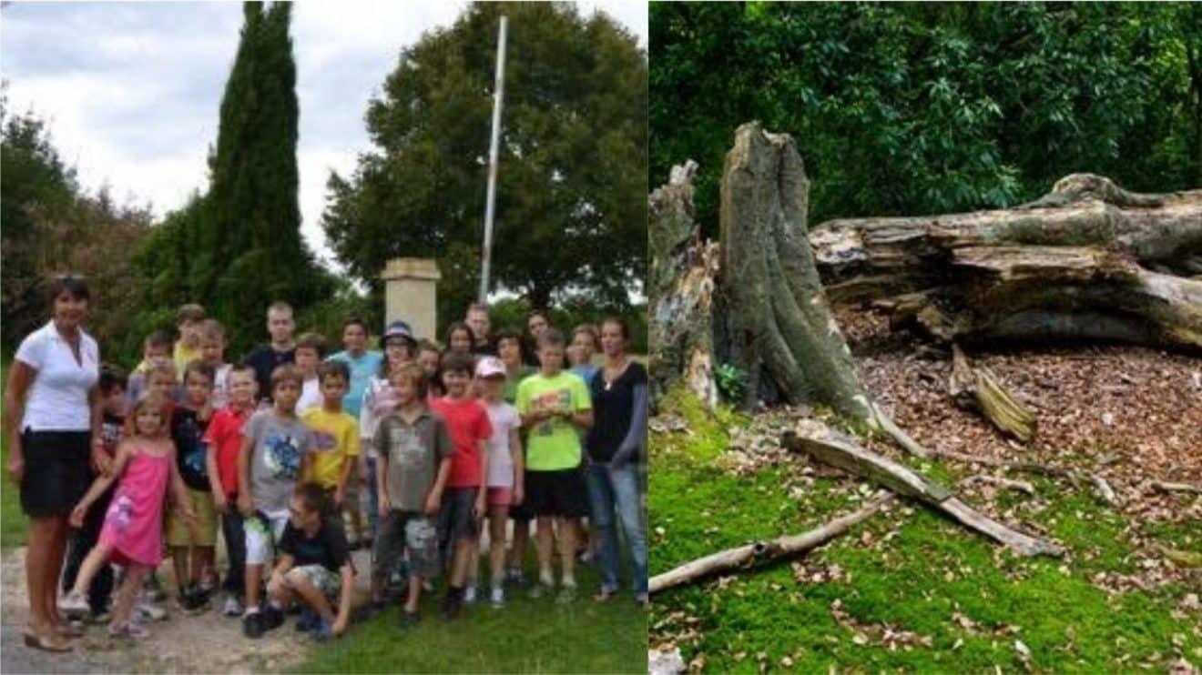 À 14 ans, un adolescent décède dans un camp de vacances, écrasé par un arbre