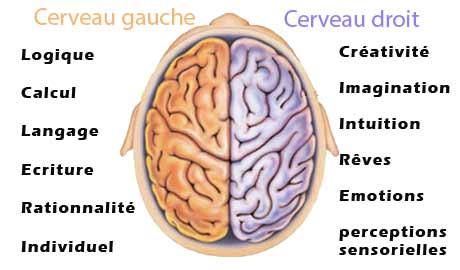Quiz: créatif et émotif ou logique et rationnel, découvrez quel hémisphère de votre cerveau est le plus dominant ?