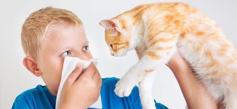 Des scientifiques ont mis au point un vaccin qui permettrait de guérir les allergies aux chats !