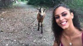 chevre selfie