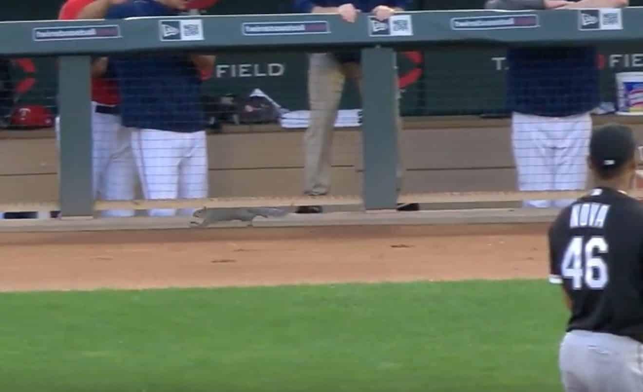 Un écureuil débarque su un terrain de baseball et fait bondir les joueurs ! (Vidéo)