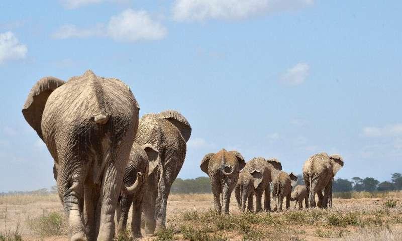 Vers une interdiction de la chasse aux trophées des animaux en voie de disparition ?