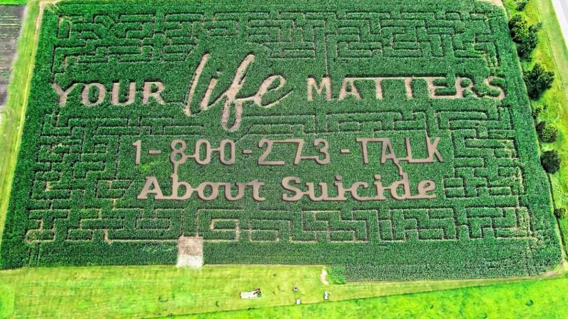 Un agriculteur fait de la prévention au suicide dans son champ de maïs transformé en labyrinthe