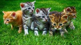 Photo d'illustration de chatons