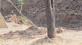 a-leopard-cache-sur-cette-photo-rend-les-internautes-completement-fous