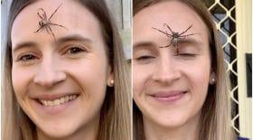 araignées visage