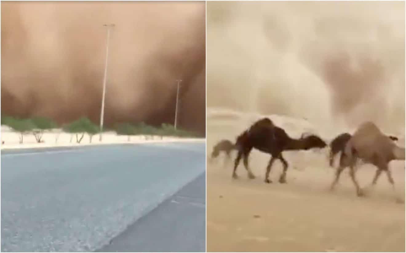 Plusieurs dizaines de chameaux courent en troupeau pour éviter une tempête de sable (vidéo)