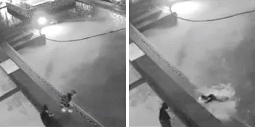 Elle regarde sa caméra de surveillance et découvre avec stupeur ce qui est arrivé à son chat cette nuit là (vidéo)