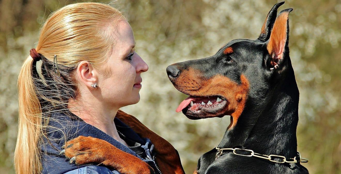 Posséder un chien réduirait le risque de mourir prématurément selon des études