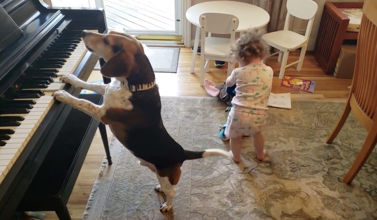 Un chien joue du piano pendant qu'un bébé danse sur sa musique : la vidéo la plus mignonne ! (Vidéo)