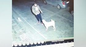 chien nuit parking