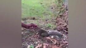 elle-suit-ecureuil-fait-decouverte-bouleversante