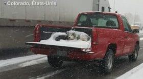 en-pleine-tempete-neige-decouvre-scene-dhorreur-larriere-pick-up