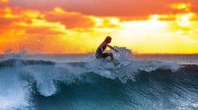 il-saute-planche-surf-sur-requin