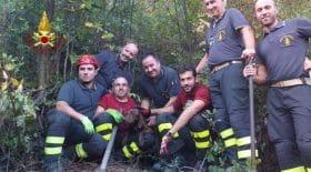Un chien enterré vivant sauvé