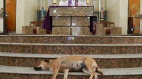 prêtre accueille des chiens errants
