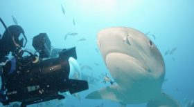 Rob Stewart Sharkwater Extinction