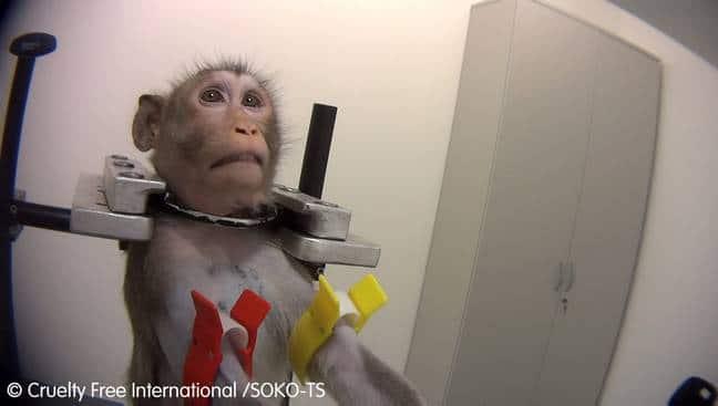 singes maltraités allemagne