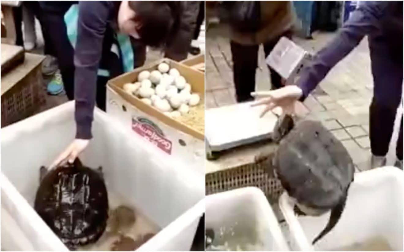 Elle se fait mordre par une tortue et n'arrive plus à récupérer son doigt (vidéo)