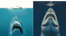 un-artiste-recree-laffiche-du-film-les-dents-de-la-mer-avec-une-vraie-photo