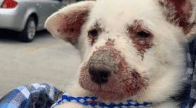 Un chiot malade de la peau retrouvé dans un chantier