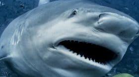 Il nous invite à repenser notre approche avec les requins