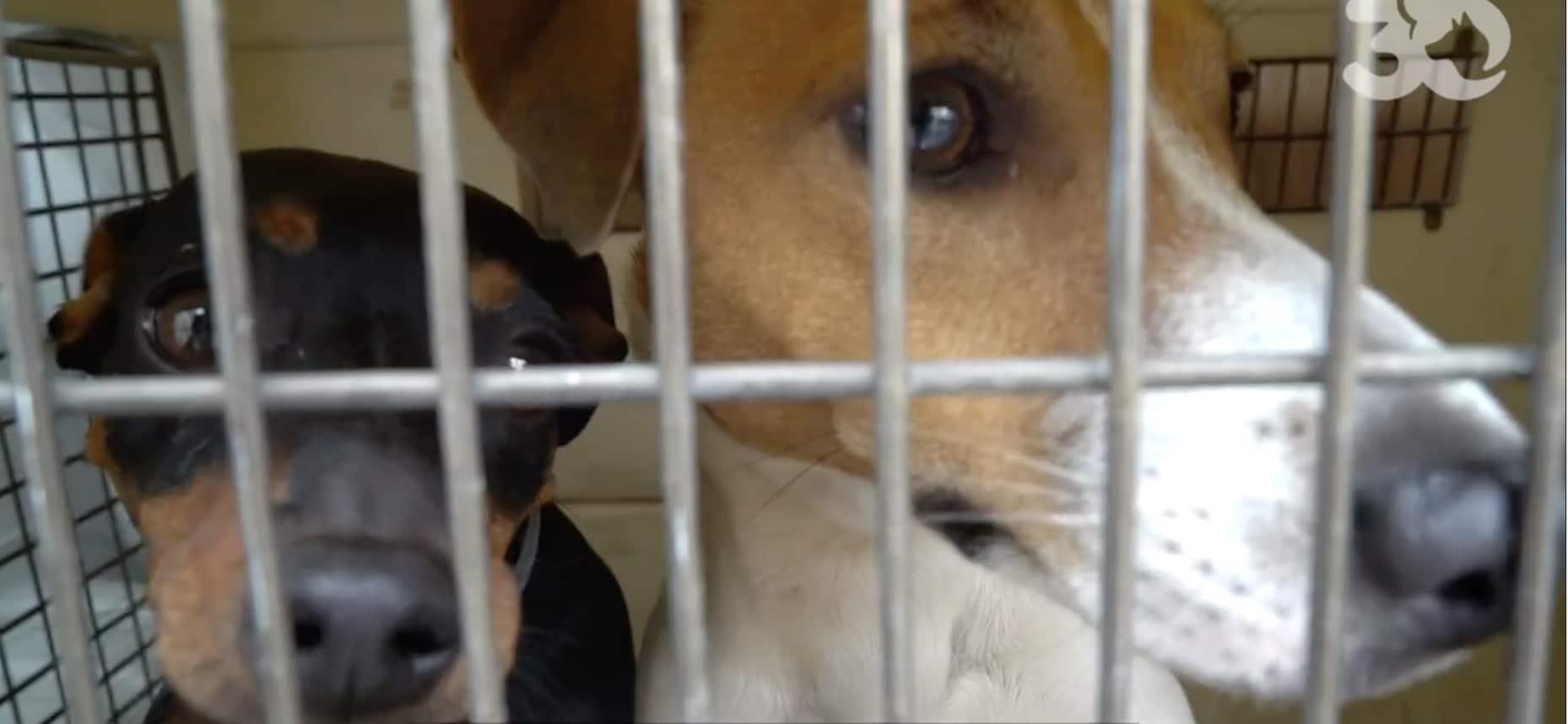 Chiens, chats, chinchillas, colombes… 50 animaux sauvés d'une maison ignoble dans l'Oise (vidéo) - Tribunal Du Net