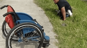 handicape chaton