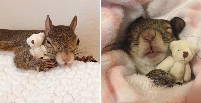 Un écureuil sauvé d'un ouragan s'est depuis créé une habitude vraiment adorable (vidéo)