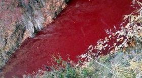 Une rivière remplie de sang
