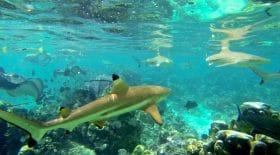Un enfant de 9 ans mordu par un requin