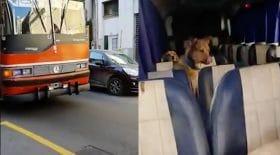 Bus animalier