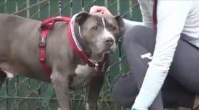 Ce chien verse une larme quand il comprend que ses maîtres viennent de l'abandonner