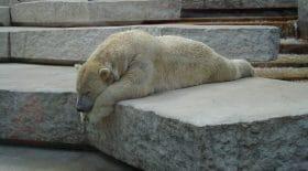 Sale affaire pour le zoo d'Amnéville