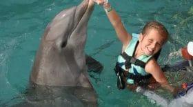 Des dauphins totalement incontrôlables