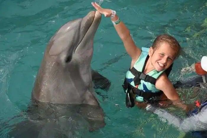 Une nage avec les dauphins qui tourne au drame pour une fillette de 10 ans
