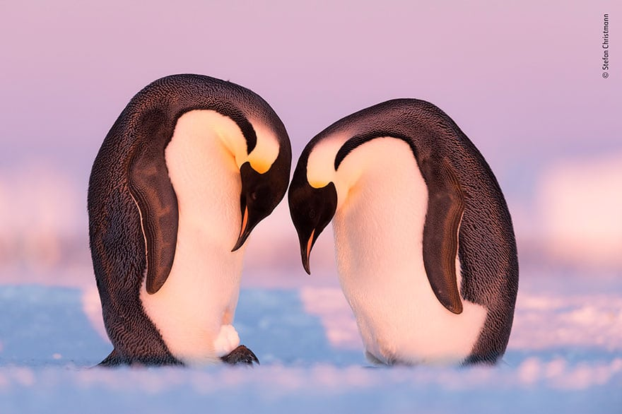 Découvrez 25 photographies animalières à couper le souffle