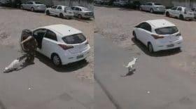 abandonne chien handicape