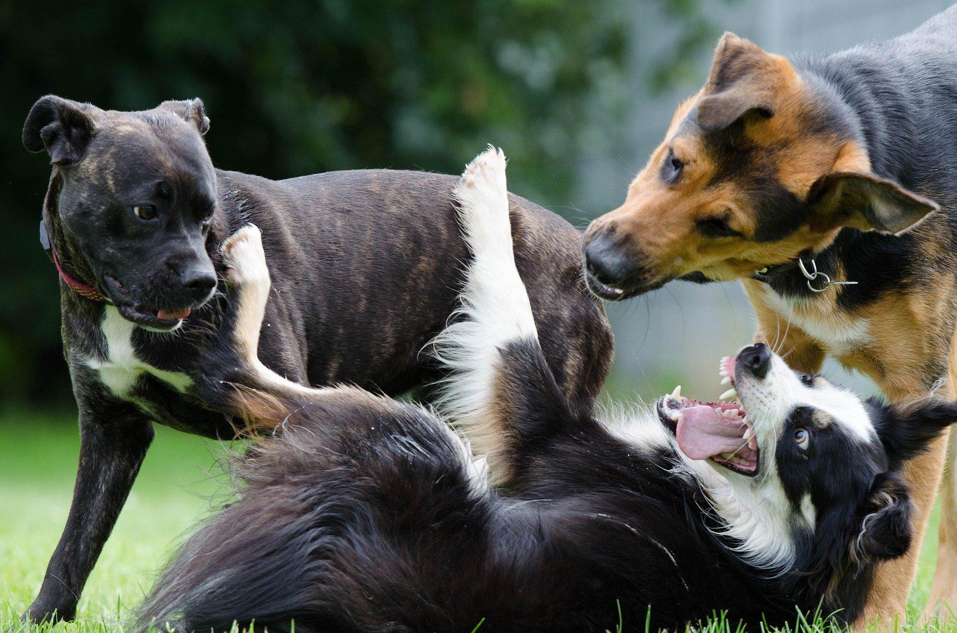 Découvrez quelle est la race de chien préférée des Français !