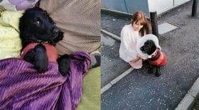 chien mourant est accompagné par 400 chiens pour sa derniere promenade